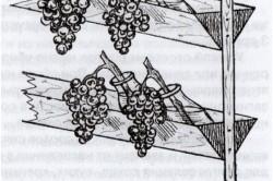 Схема хранения винограда