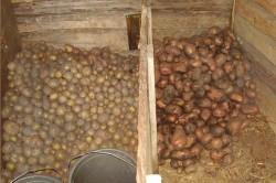 Хранение картошки