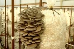 Спелые грибы