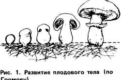 Мицелий