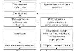 Технологическая схема выращивания вешенки (однозональная технология).