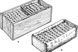 Схема укладки яблок в ящики: а – укладка прямыми рядами в трехторцовый ящик; б – укладка яблок в ящик по диагонали.