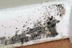 Черная плесень на стене