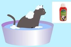 Противоблошиная обработка домашних животных