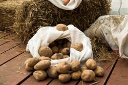 Картофель в погребе
