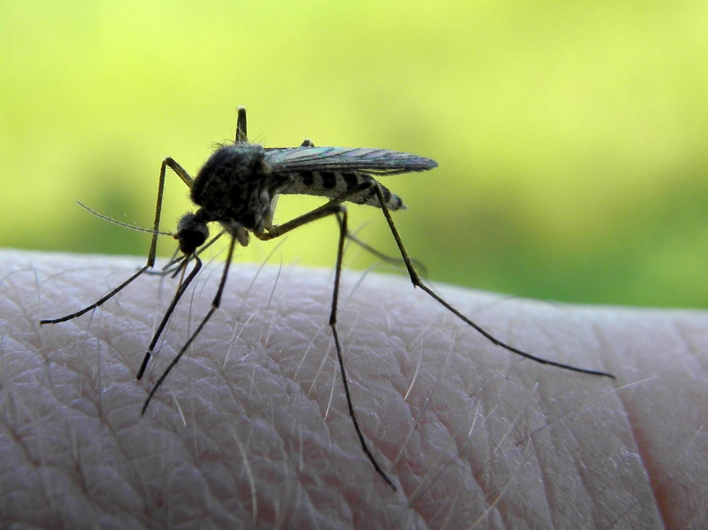 Подвальные комары.