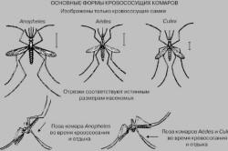 Основные формы кровососущих комаров