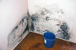 Чтобы избавиться от плесени в подвале, обработайте все помещение антигрибковыми составами.