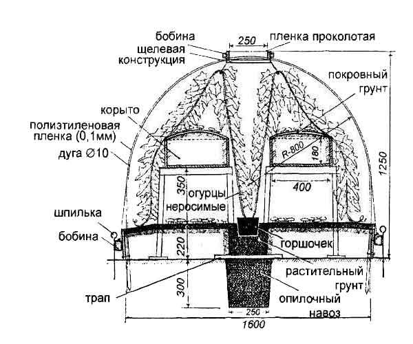 Схема выращивания шампиньонов.
