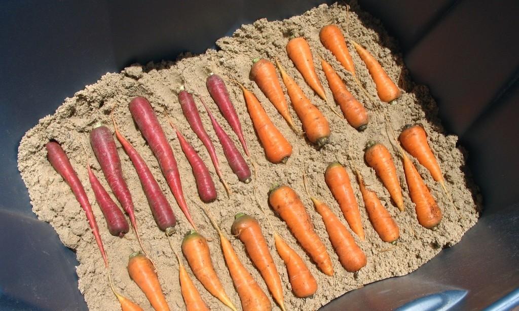 Как хранить морковь в домашних условиях: в погребе, на балко.