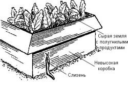Схема устройства ловушки для слизней